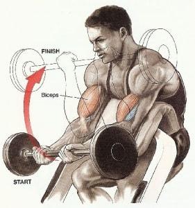 برنامه تمرینی برای دو برابر کردن حجم جلوبازو و پشت بازو
