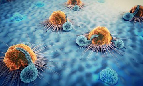 شش خاصیت قارچ گانودرما که شما را حیرت زده خواهند کرد