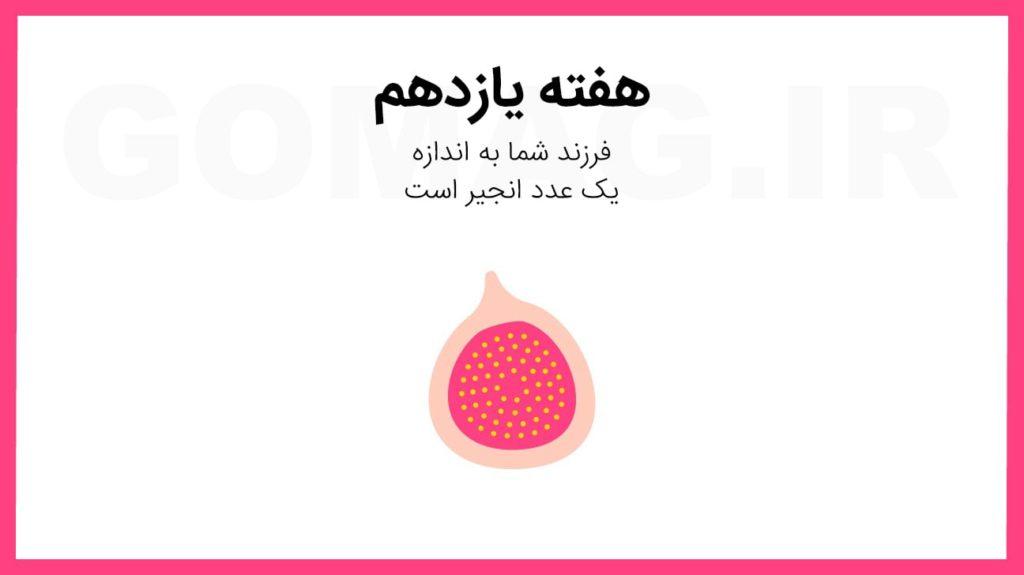 تقویم بارداری: راهنمای تصویری تمام هفته های دوران بارداری