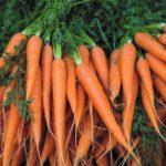 شش خاصیت هویج برای سلامتی که پشتوانه علمی دارند