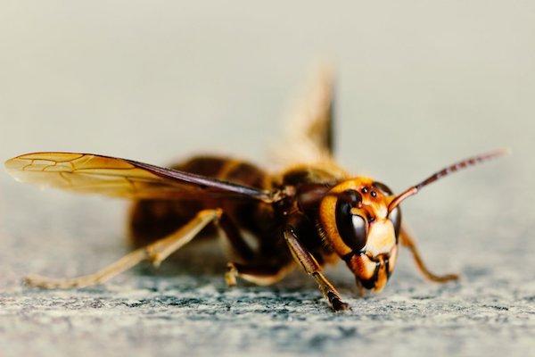 درمان نیش زنبور با موثر ترین روش های خانگی