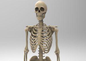 حقایق شگفت انگیزی درباره استخوان ها که احتمالا نمی دانستید