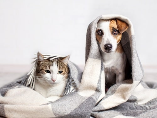 حساسیت به حیوانات خانگی چیست؟ از علائم تا درمان